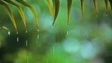 Relaxing Music &amp Soft Rain Relaxing Piano Music, Sleep Music, Peaceful Music