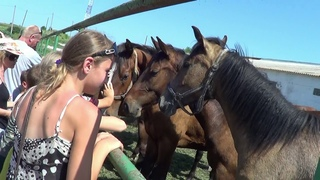 Екскурсія на конезавод, с.Шапарівка, Білокуракинський район, 13.06.2012