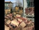 150 тонн санкционных яблок уничтожили в Томске