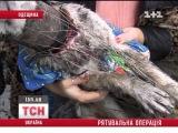 В Одессе поиздевались над собакой. Как всегда никто не виноват.