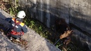 В Уфе спасли лосиху, попавшую в яму