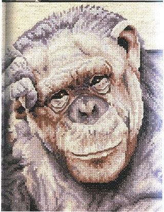 обезьяна.rar