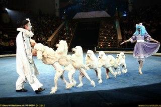 Афиша цирка в Воронеже на сентябрь месяц 2013.