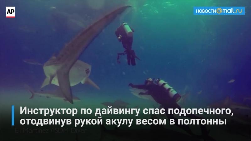 Инструктор по дайвингу одной рукой отодвинул акулу весом в полтонны