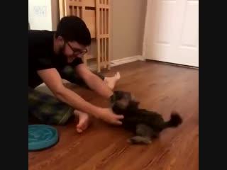 Крошечный щенок просто хочет скользить