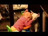 Cute Bull terrier Dogs and Adorable Babies - Funny Dog loves baby Compilation (1)
