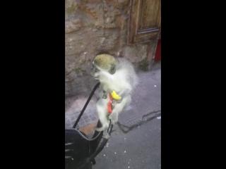 Miky.....my lovely monkey