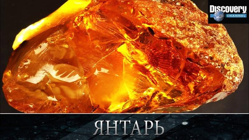 Янтарь - Из чего это сделано .Discovery channel