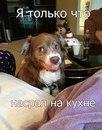 Фото Олега Кулика №1