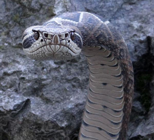 Резчик по дереву Майк Стиннетт из Орегона делает трости в виде змей, удивительно...