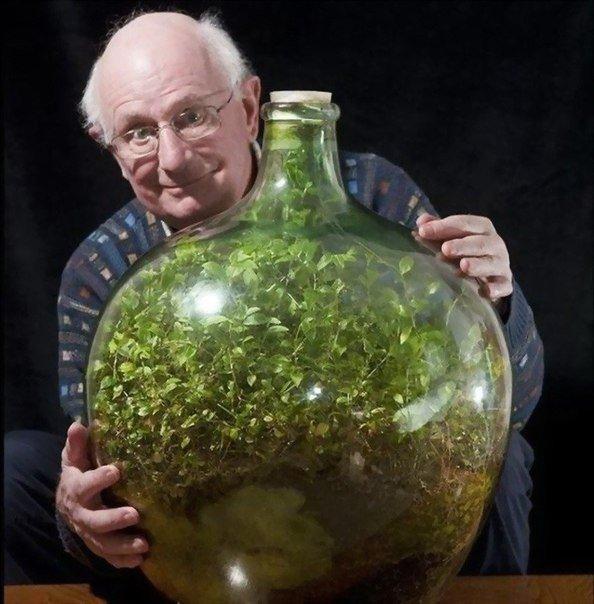 Экосистема в бутылке.