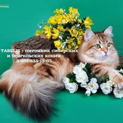 Татьяна К-Ж