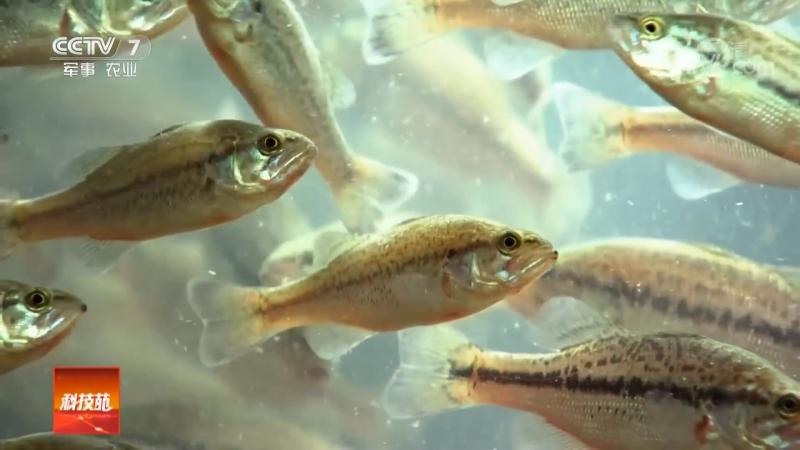 Технология разведения рыбы в металлических контейнерах ДаТе СянЦзы Лай Ян Юй (большой железный ящик для выращивания рыбы). П