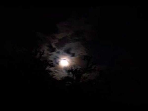 Tish Hinojosa Noche sin estrellas