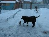 Питомник предлагает щенков и подрощенных собачек РусскогоТоя, Чихуахуа, Йоркширского Терьера.Передержка собачек декоративных пород во время вашего отдыха.