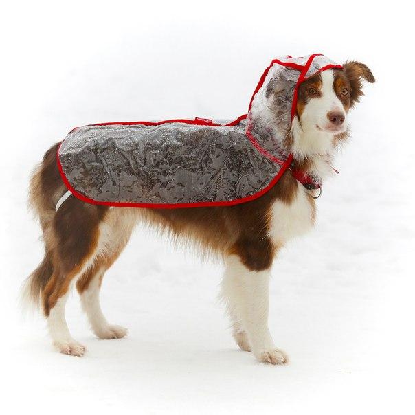OSSO Fashion - лучшие товары для животных,дрессировки,спорта TPK_Cw-7iuo