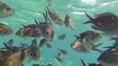 Рыбки Греция остров Родос