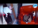 Funny Videos 2015   Funny Fails   Funny Cat Video  Funny Vines   Funny Animals