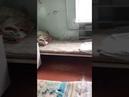Детская инфекционная больница города Прохладного Кабардино-Балкарская республика 24.03.2018