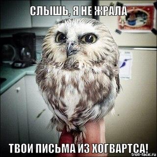 http://cs616230.vk.me/v616230488/1553e/Ti4pdp81CGI.jpg