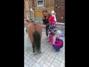 первый урок в пони лагере