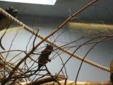 Краснорукие тамарины в пингвинарии