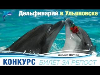 Шоу Черноморских Дельфинов в Ульяновске