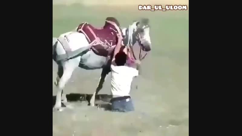 Dar_ul_uloomBotHB5gHqqG.mp4