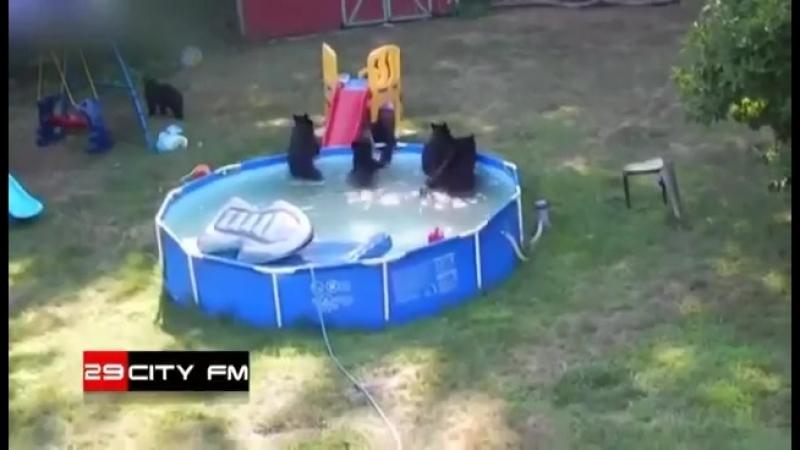 Медведи в бассейне в жилом доме