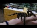 Мы с пауком)Милости-пряности)