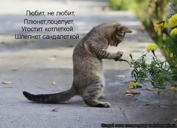 http://cs407530.vk.me/v407530452/463a/G31gsax9QkY.jpg