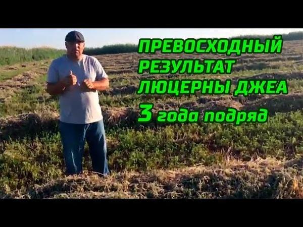 1-серия. Скошенная люцерна Джеа - Gea (23-05-2018, 3 сезон, посев 2016 год)