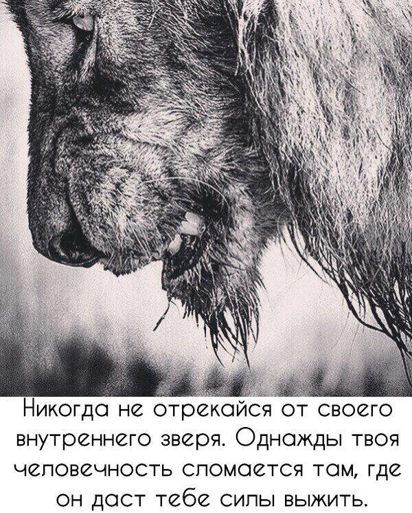 https://pp.userapi.com/c635100/v635100633/21f49/PxUNuVzzGCE.jpg