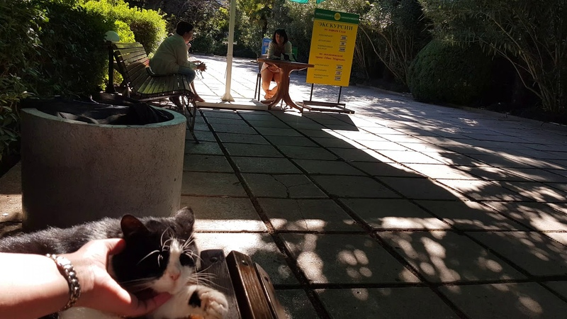 Никитинский парк, кот))