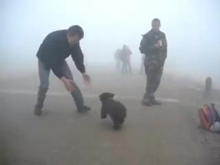 Самое милое нападение медведя на человека