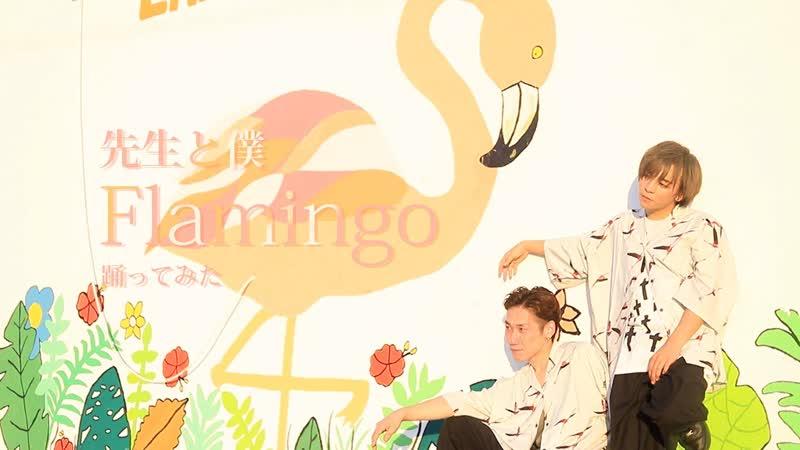 先生 Flamingo 踊ってみた 僕 sm34168208