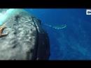 Кит🐳 - защитник от акул!🦈