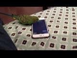 Talking bird activates Siri on the iPhone by saying 'Hey Siri'