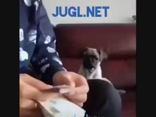 JUGL.NET - заработки по нарастающей без вложений в евро - немецкое качество!💶👍💶.mp4