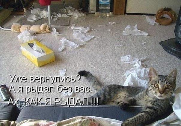Наши кошки  NClMUJUG_i0