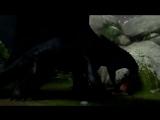 Беззубик- Angel of Darkness