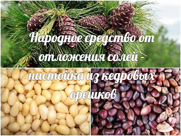 Народное средство от отложения солей - настойка из кедровых орешков.