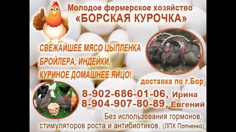Реклама - «Борская курочка»
