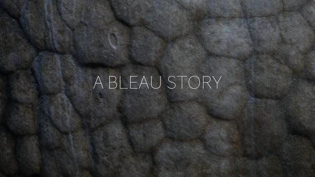A Bleau Story Fontainebleau 2016 17
