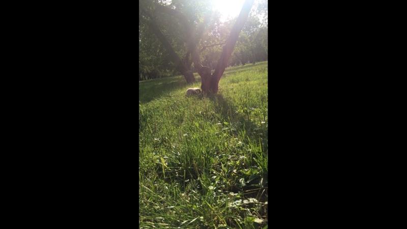 Яблоневый сад в Коломенском парке