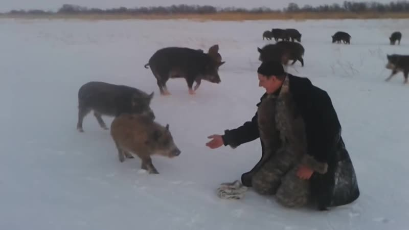 Зимняя рыбалка с дикими кабанами под Астаной pbvyzz hs,fkrf c lbrbvb rf,fyfvb gjl fcnfyjq
