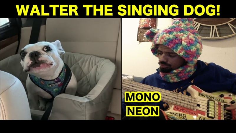 MonoNeon WALTER THE SINGING DOG