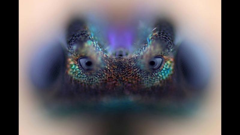 Amazing Electron Microscope Images Part 4