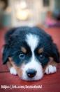 Как бы люди не клялись в верности, больше собак про неё всё равно никто не знает.