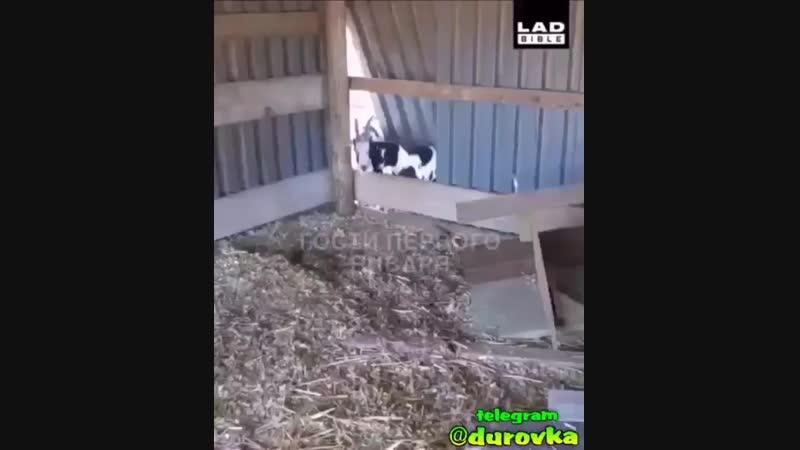 Video-254411ef098ada94d8bc5d0479e3a213-V.mp4